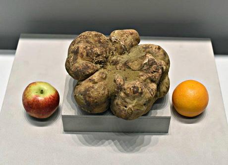 Крупнейший в мире трюфель продан по дешёвке