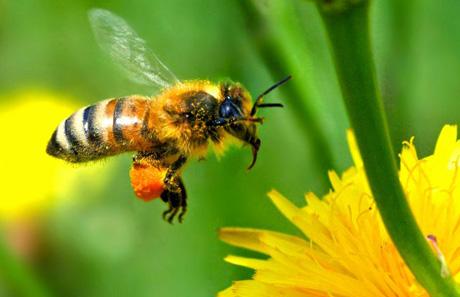 Лучший подарок конечно же мед